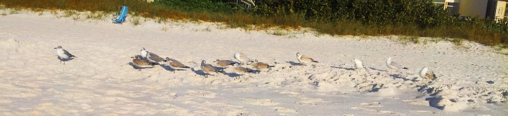 seagulls on Naples Beach