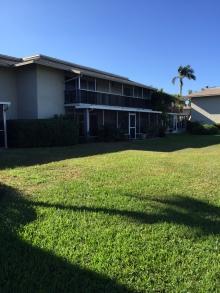 221Palm2-backyard
